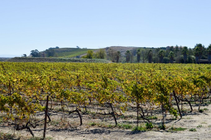 Golden Gate City: Wine Country